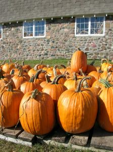 pumpkin_farm_1.jpg